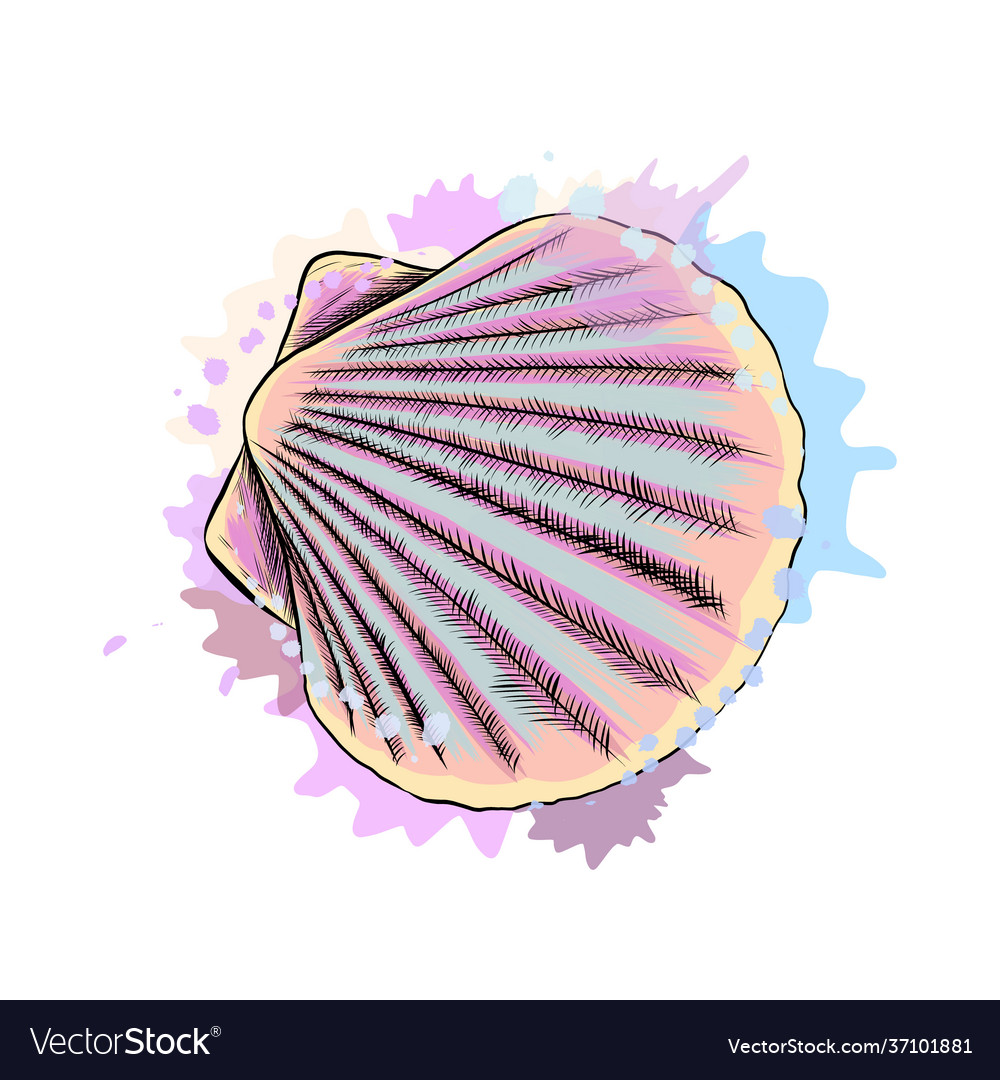 Top view sea shell scallops from a splash of