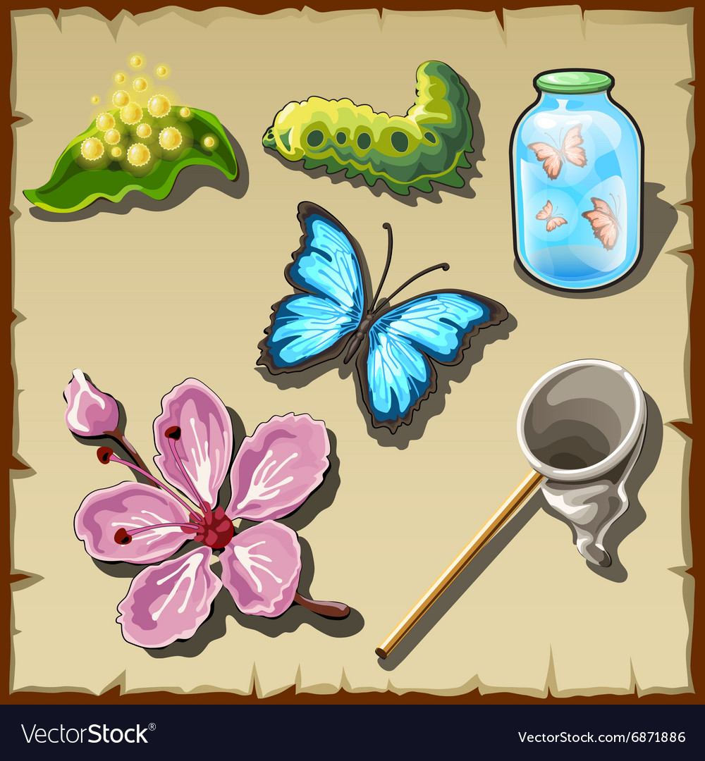 Life of a butterfly in drawn set of entomologist