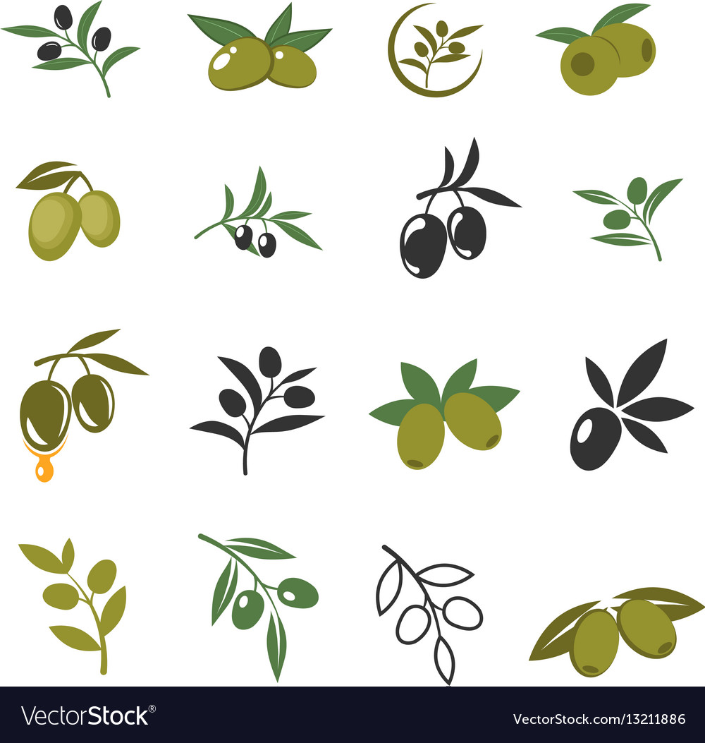 Mediterranean olive branches icons with oil