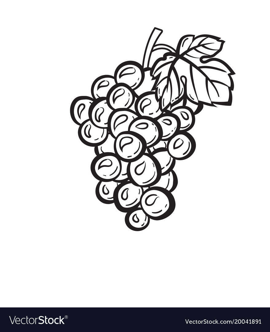 Cluster of grapes hand drawn sketch icon Vector Image