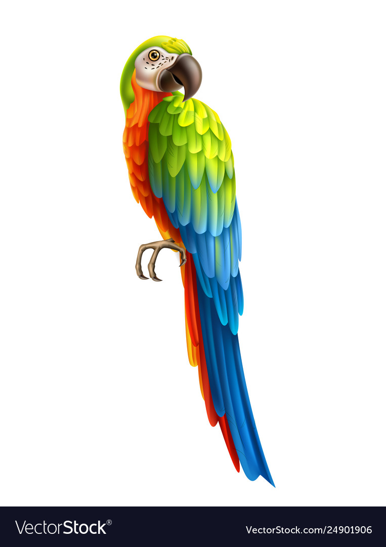 Realistic colorful parrot bird 3d macaw