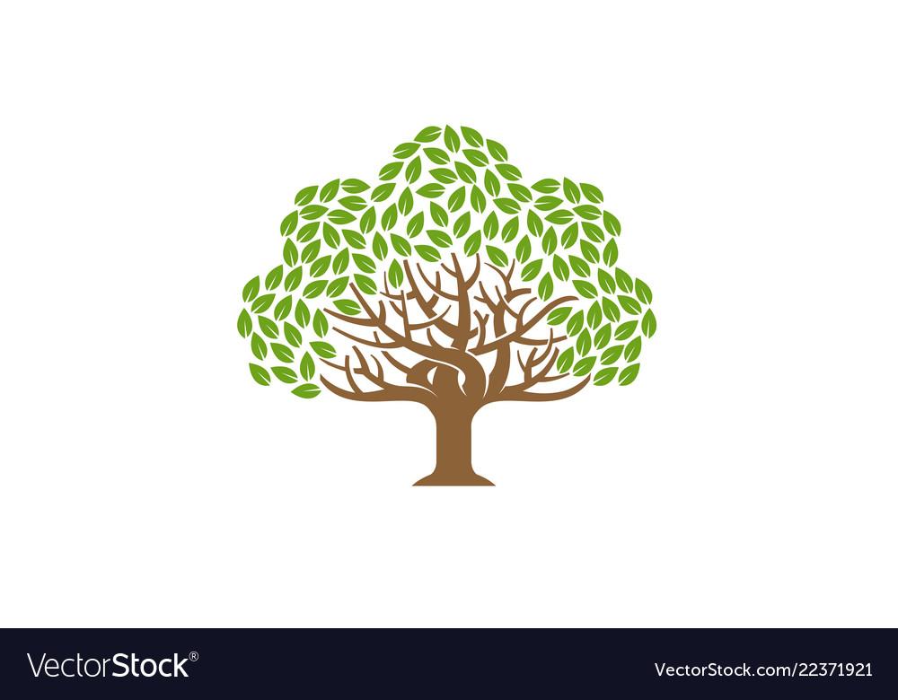 Green creative oak tree logo