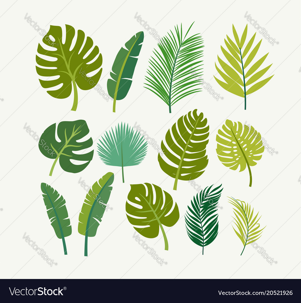 Tropical Leaves Palms Trees Royalty Free Vector Image