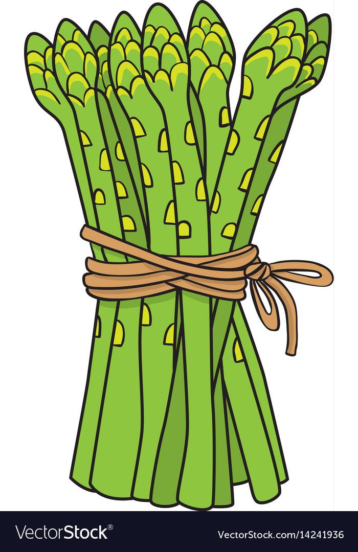 Cartoon image of asparagus vector image