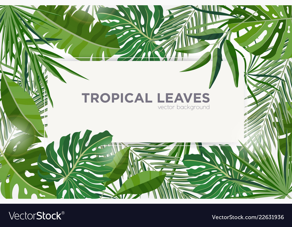 Horizontal Background With Green Tropical Leaves Vector Image Leaves design resources · high quality aesthetic backgrounds and wallpapers, vector illustrations, photos, pngs, mockups, templates and art. vectorstock