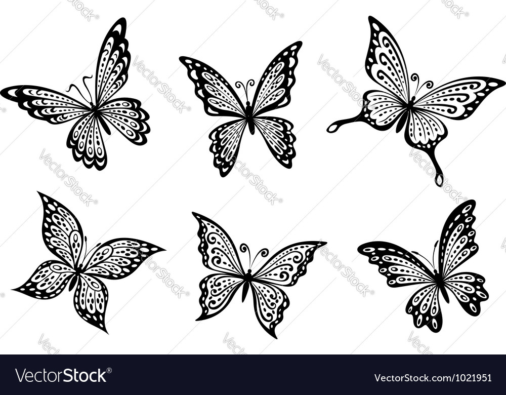 Beautiful butterflies insects
