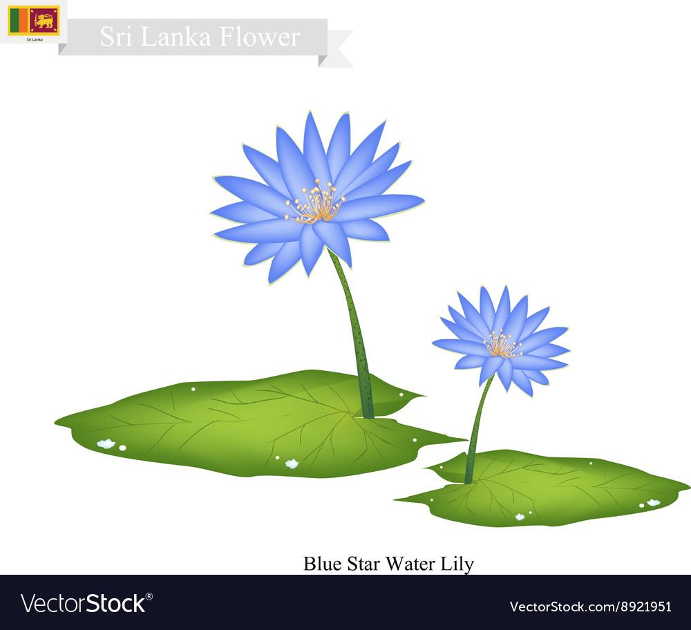 Blue Star Water Lily National Flower of Sri Lanka vector image