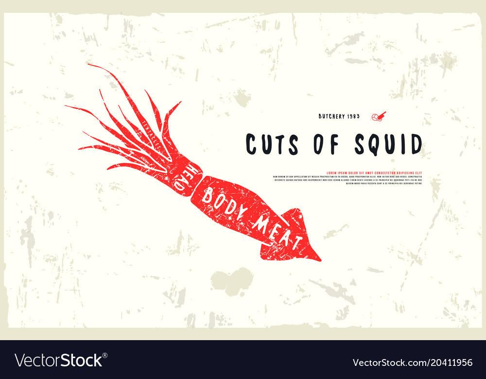 Stock Squid Cuts Diagram Royalty Free Vector Image