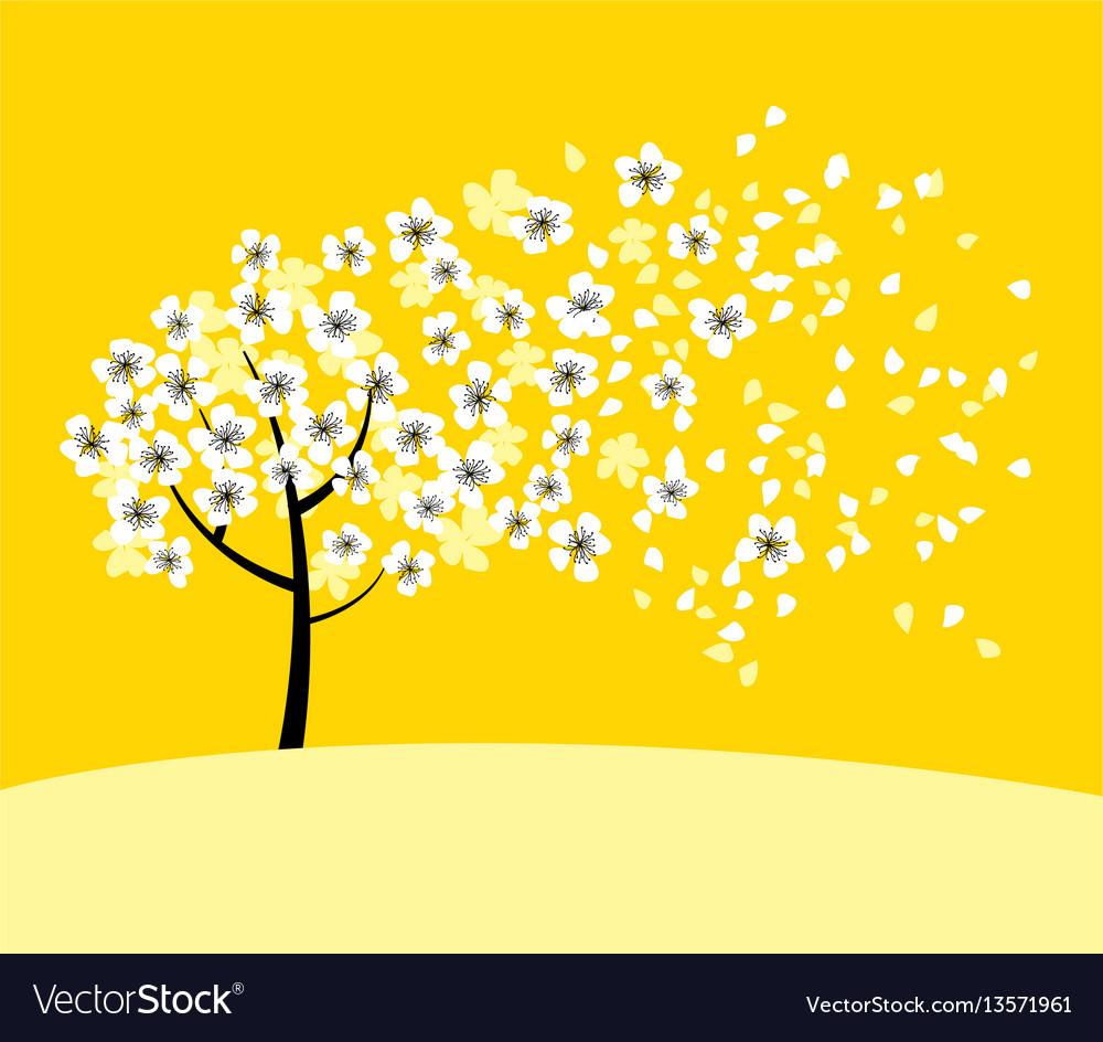 White sakura tree blossom on sunny yellow