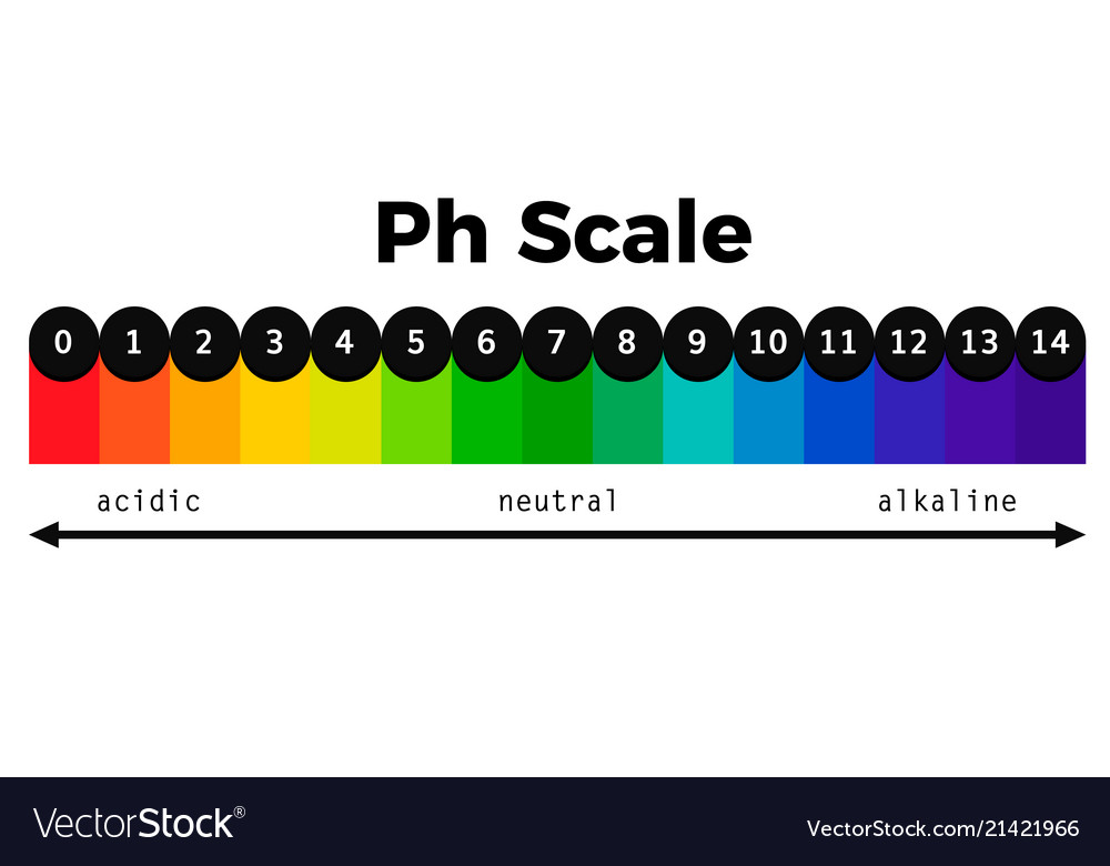 ph scale chart vector image