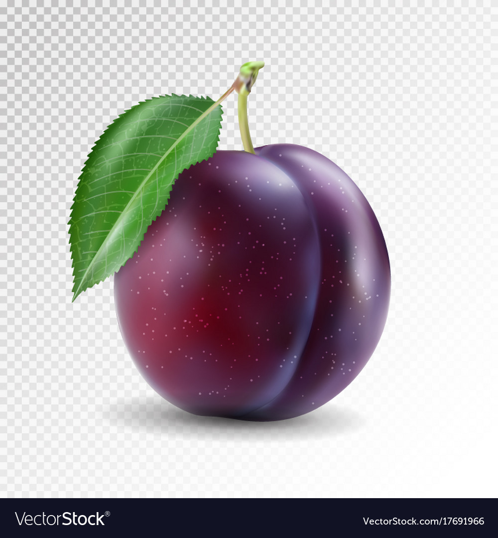 Ripe plum with green leaves quality photo vector image