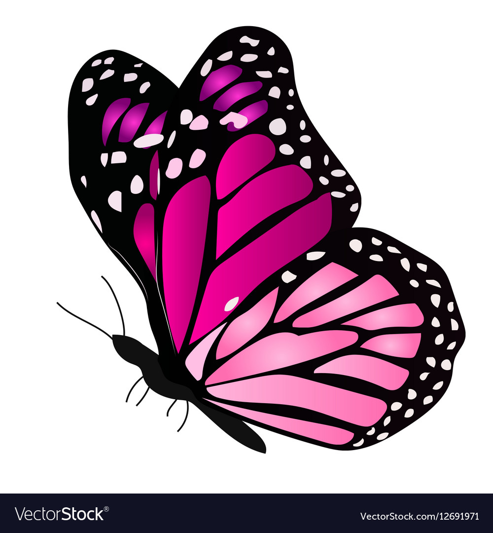 A Colorful Butterfly Royalty Free Vector Image