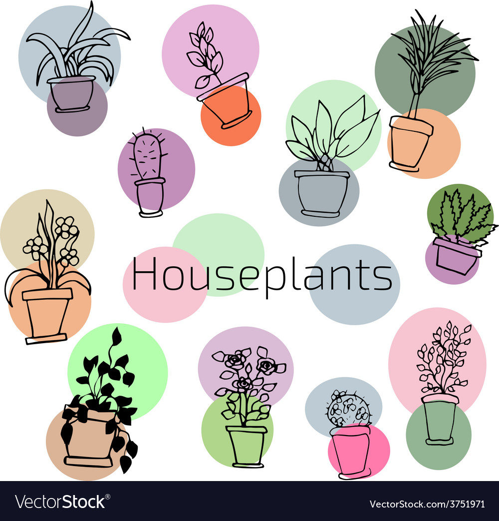 Design set of house plants in colorful circles vector image