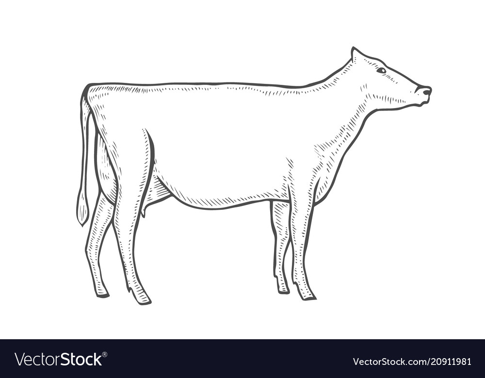 Engrave cow