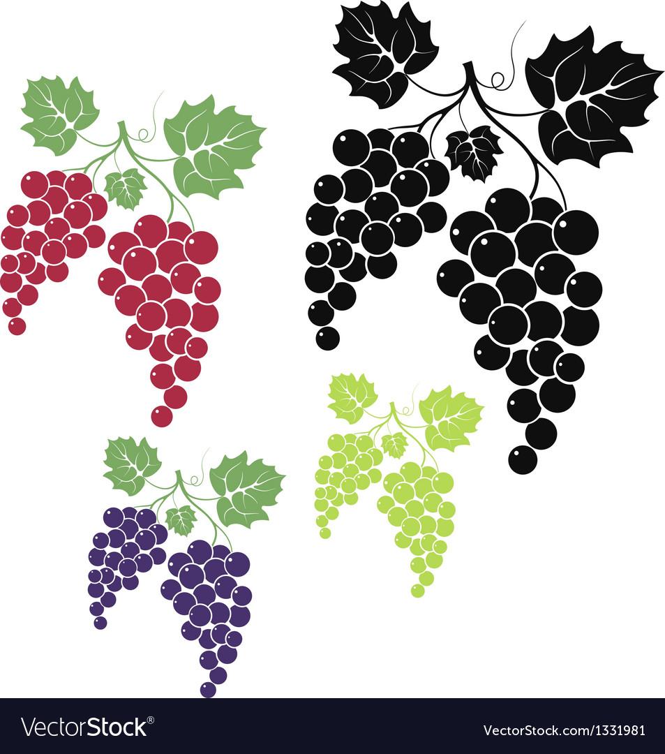 grape royalty free vector image vectorstock rh vectorstock com graph vector equation grapes vector black and white