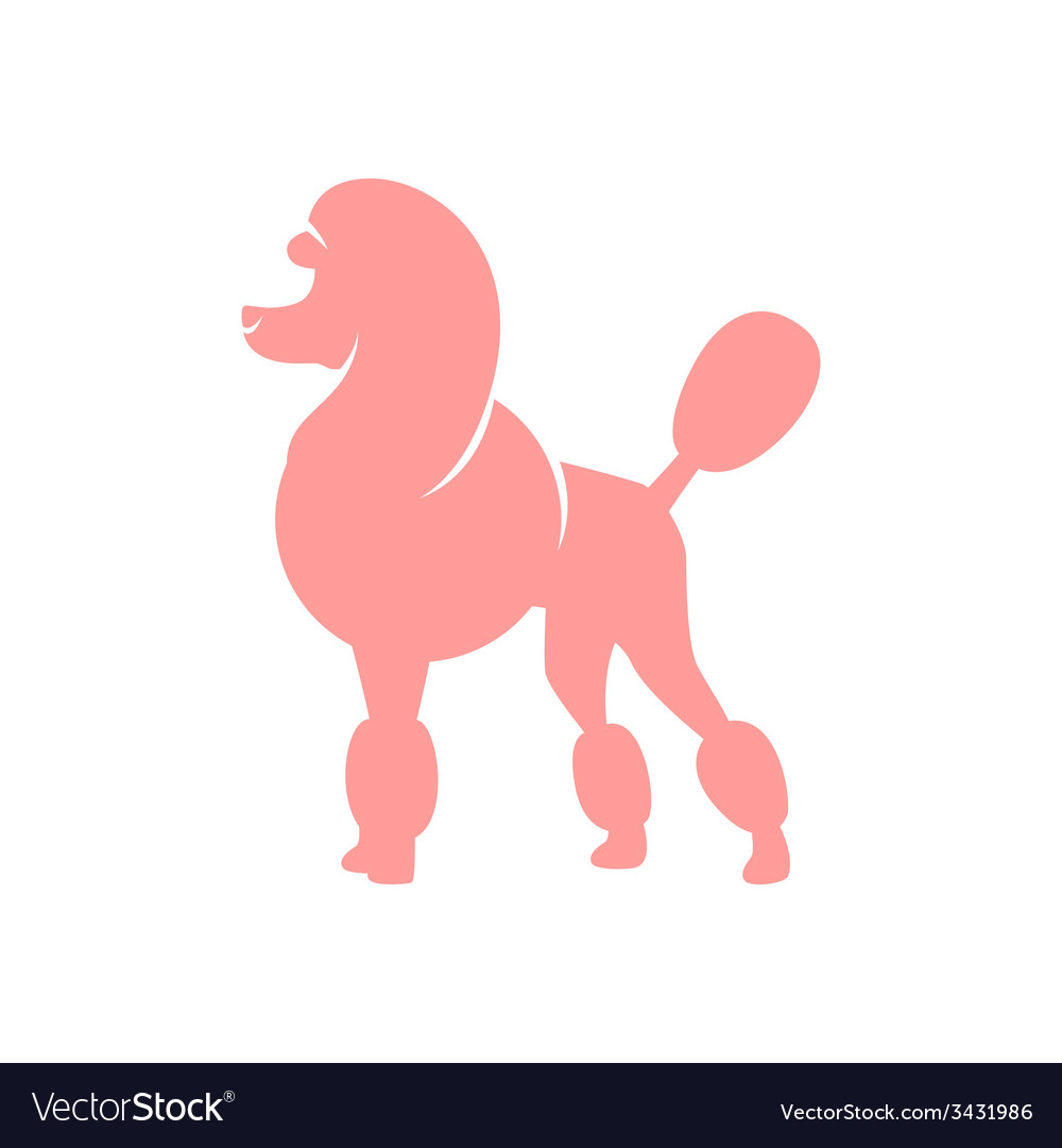 Pink poodle vector image