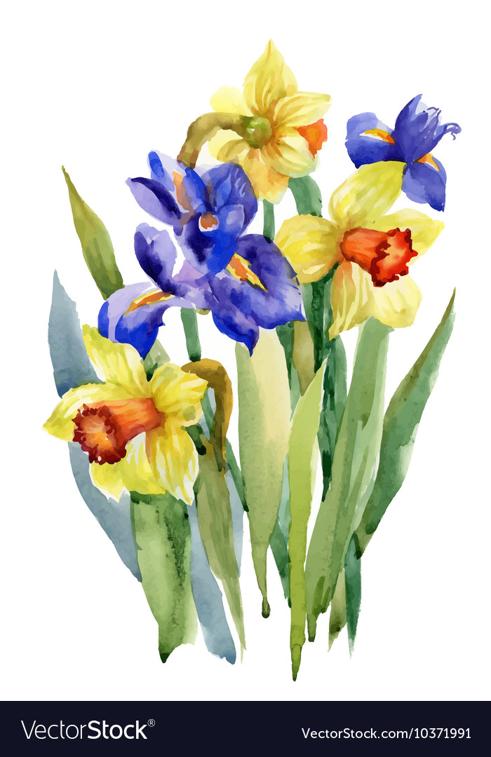 Watercolor Summer Garden Narcissus Blooming Flower