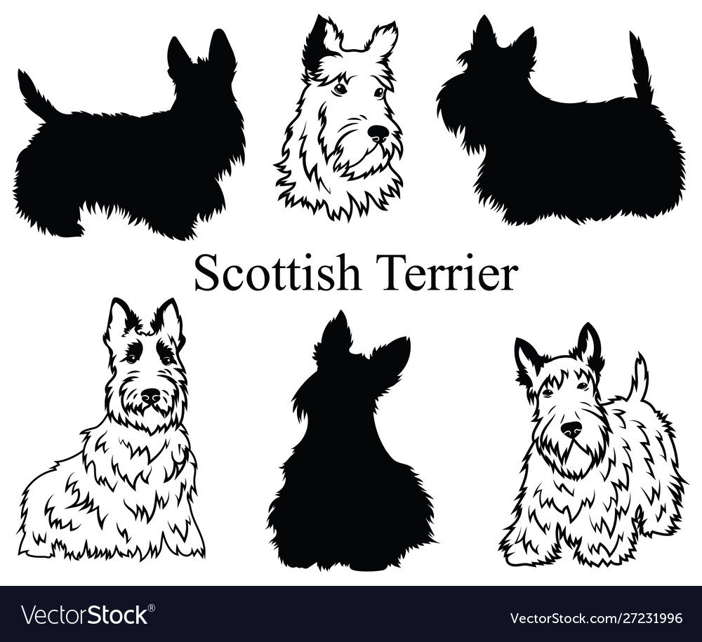 Scottish terrier set collection pedigree dogs