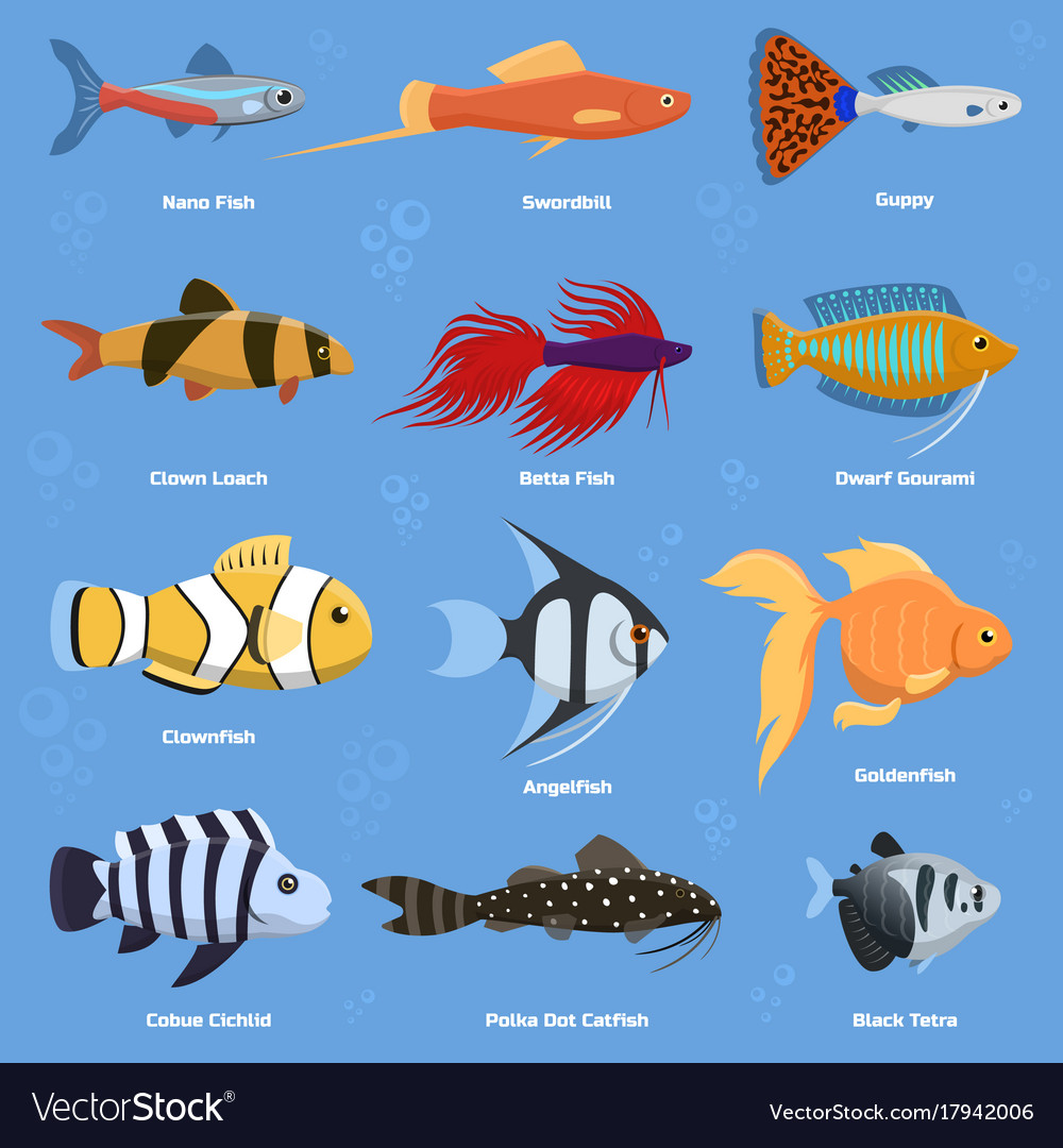 Aquarium And Ocean Fish Breeds Underwater Bowl Vector Image