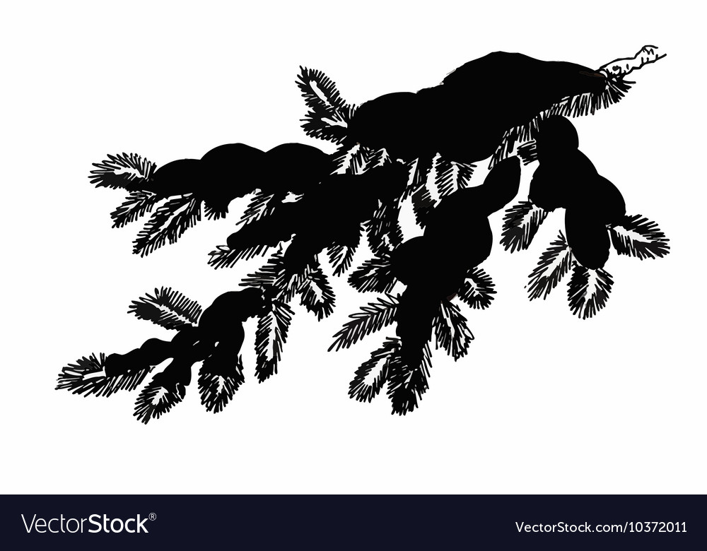 Coniferous pine branch in snow greeting card vector image