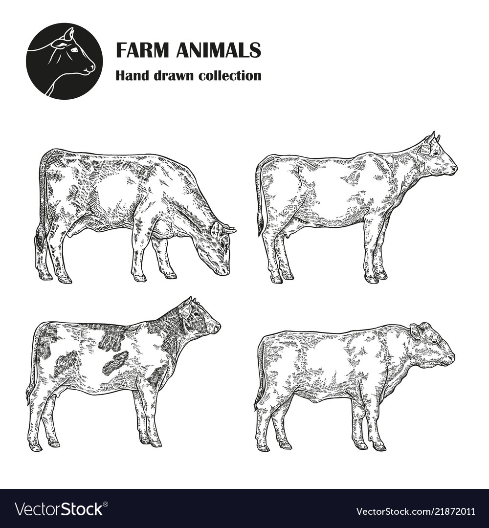 Hand drawn milk cow set isolated on white