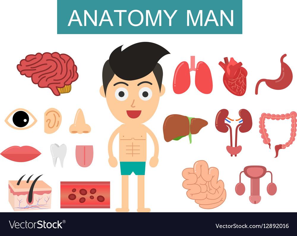 Anatomy body man