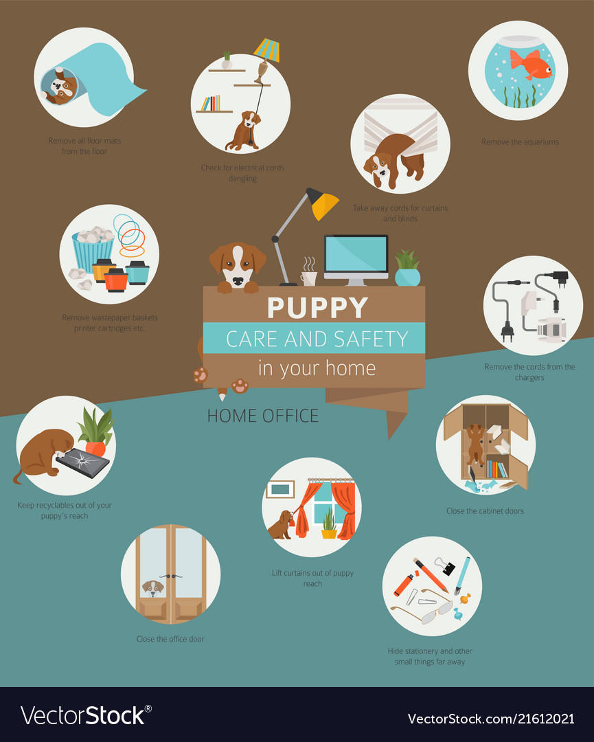 Puppy care and safety in your home home office