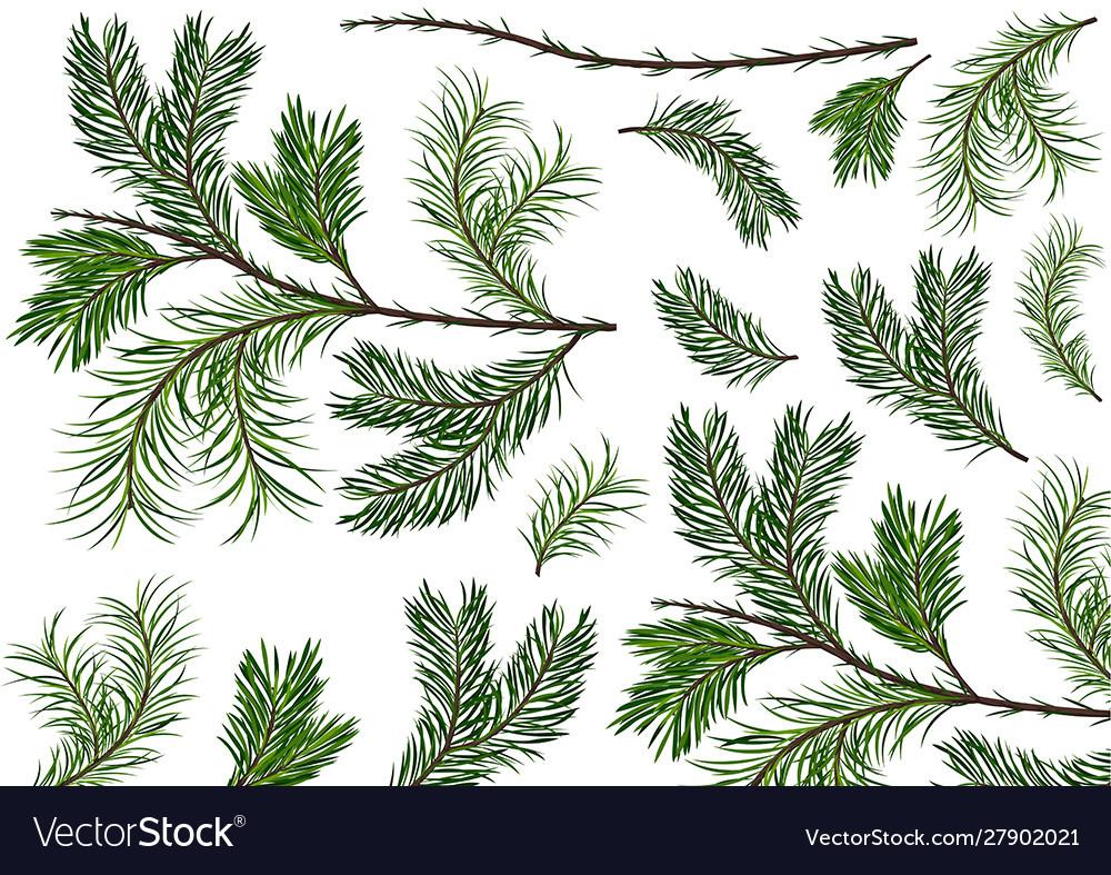 Set green spruce twigs