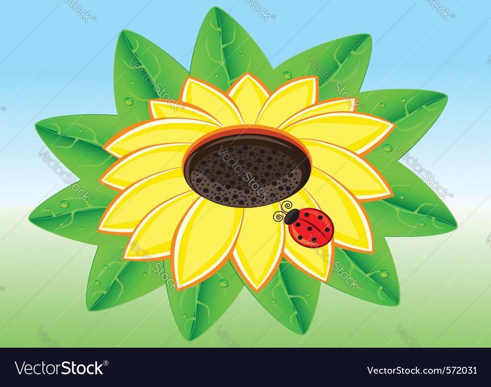 Ladybug on yellow sunflower