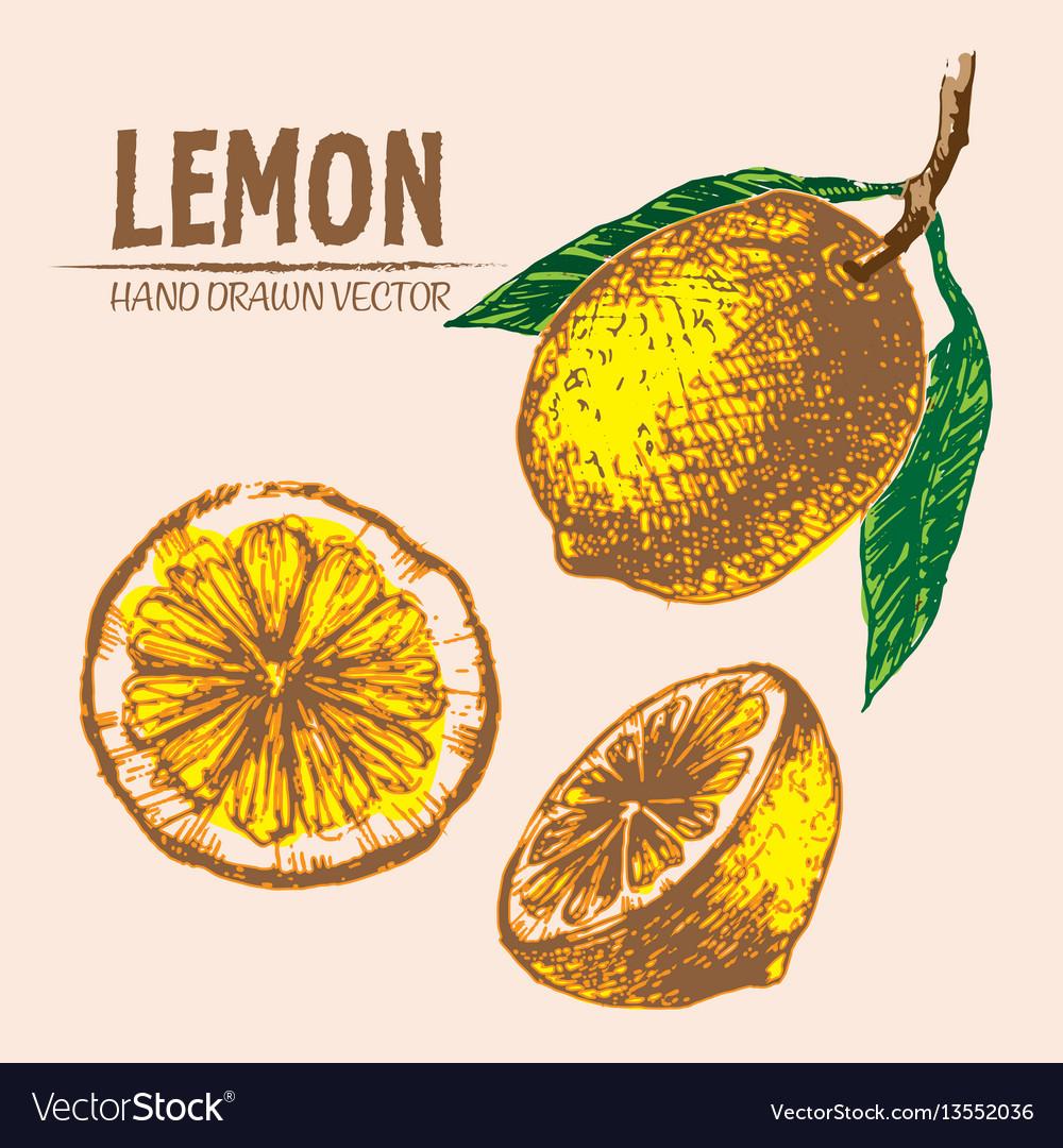 Digital detailed color lemon hand drawn
