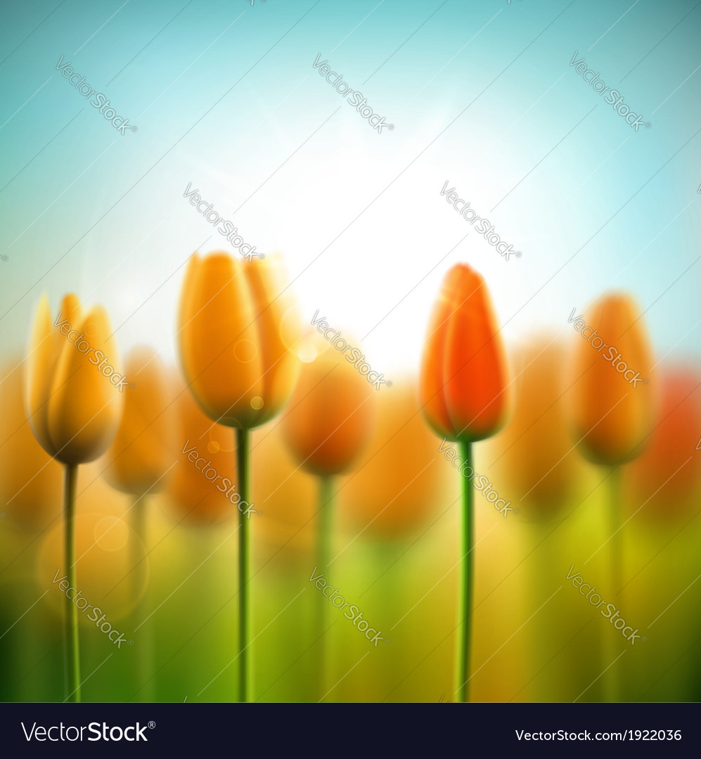 Spring background with tulips vector image
