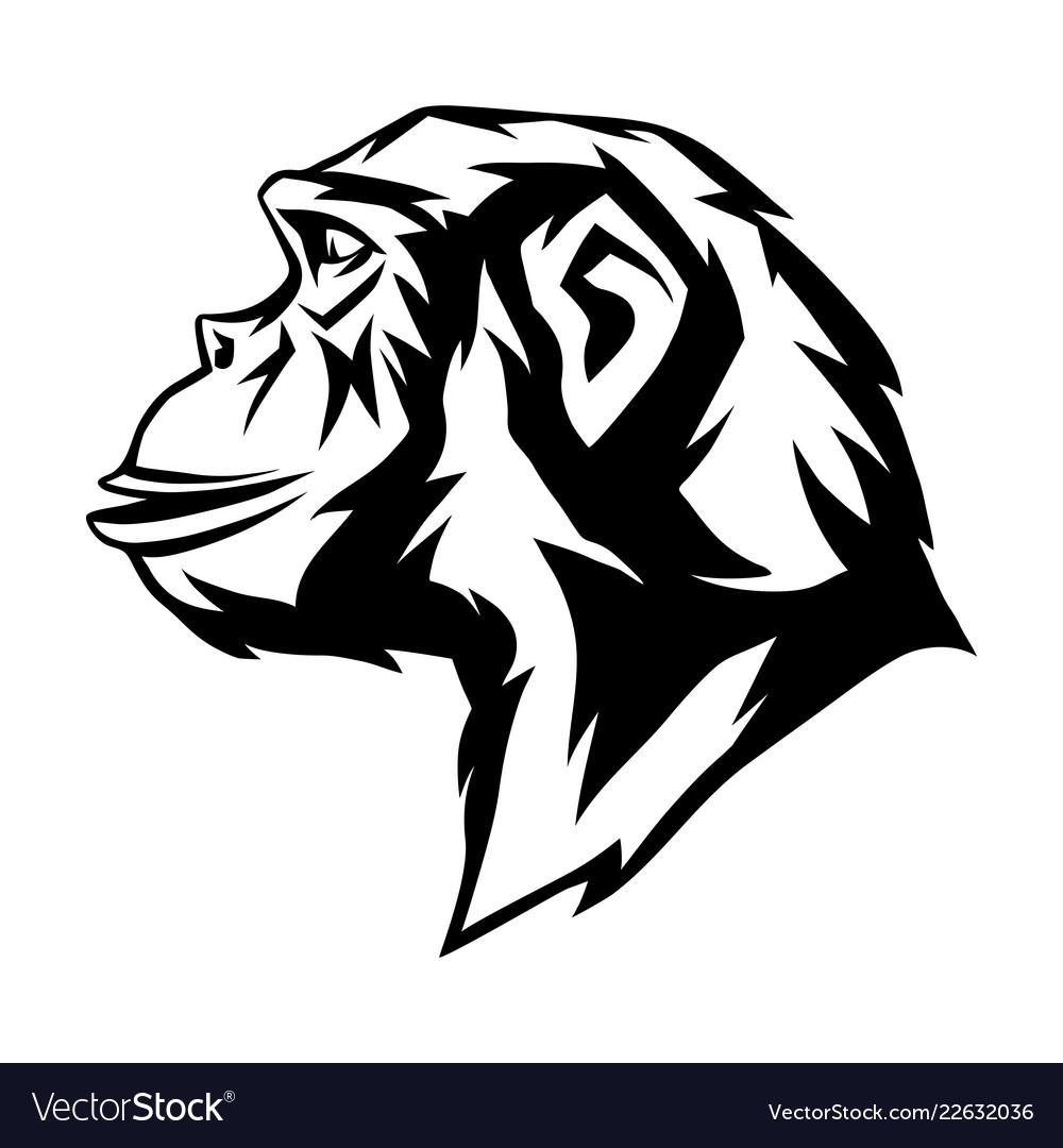 Wild monkey head