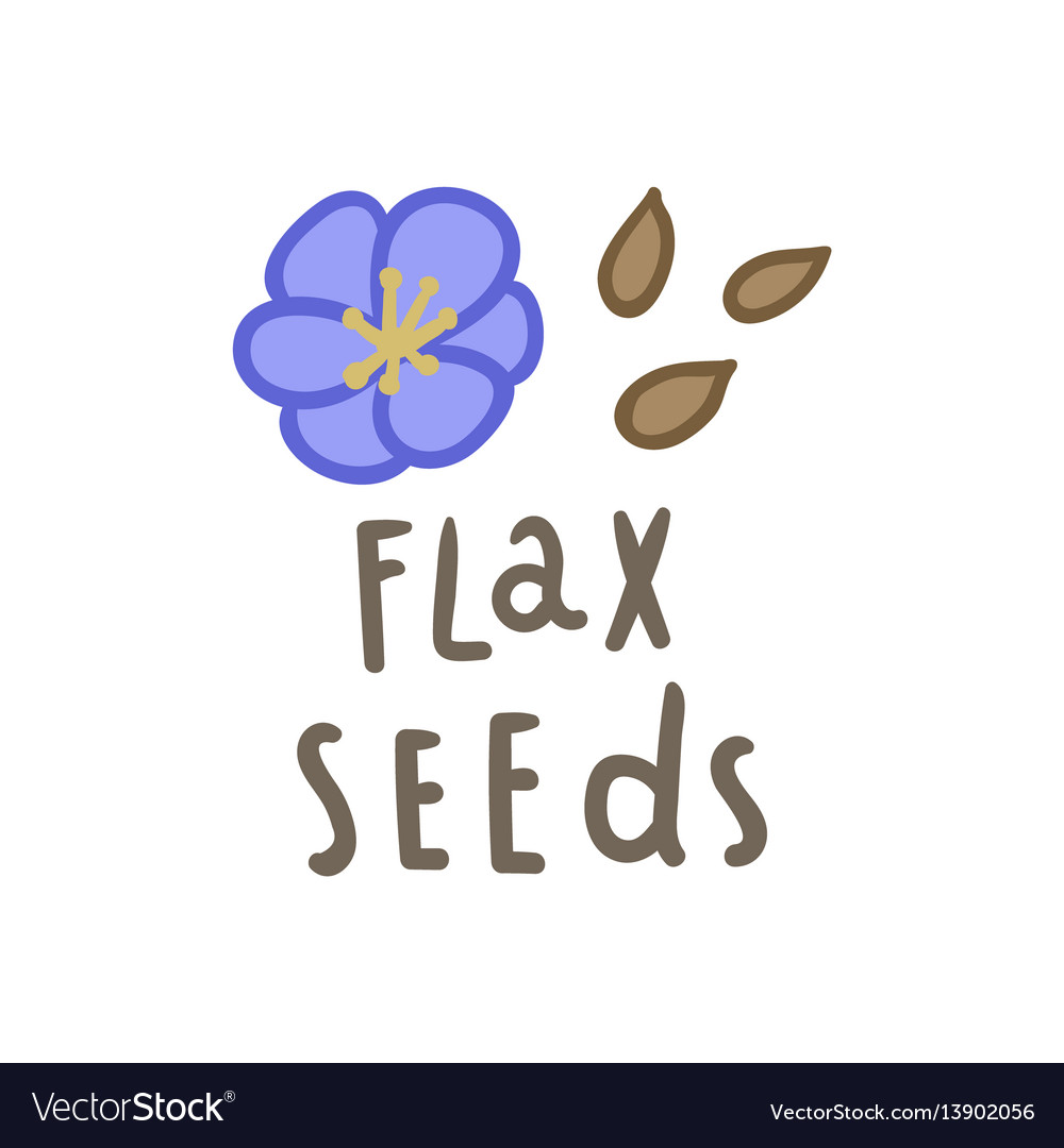 Flax seeds superfood vector image