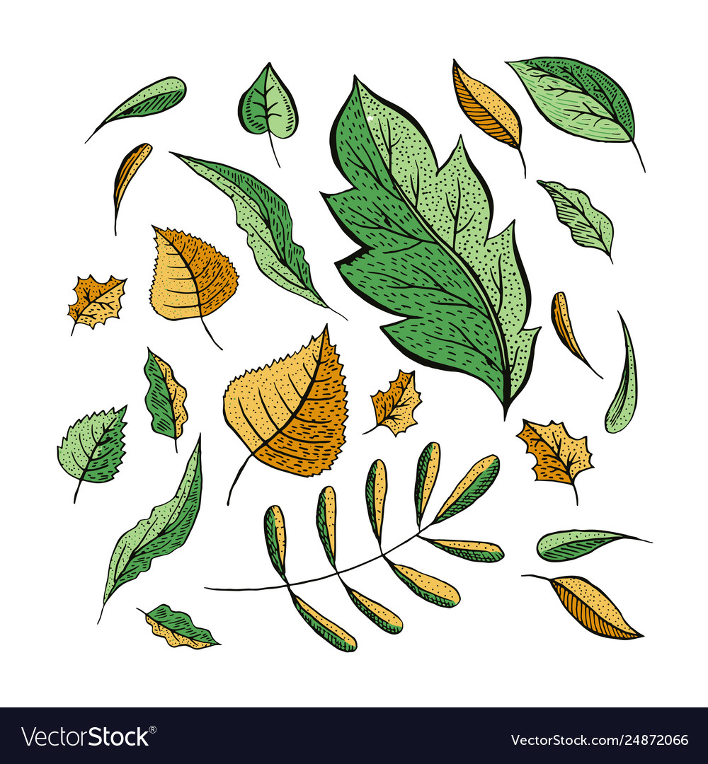 Autumn leaves color set