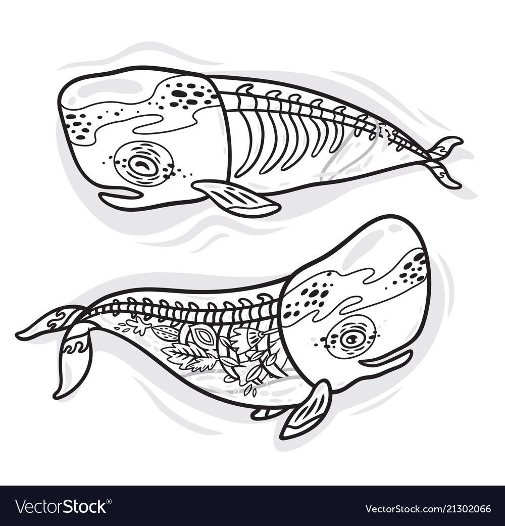 Floral Anatomy Whales In Outline Royalty Free Vector Image