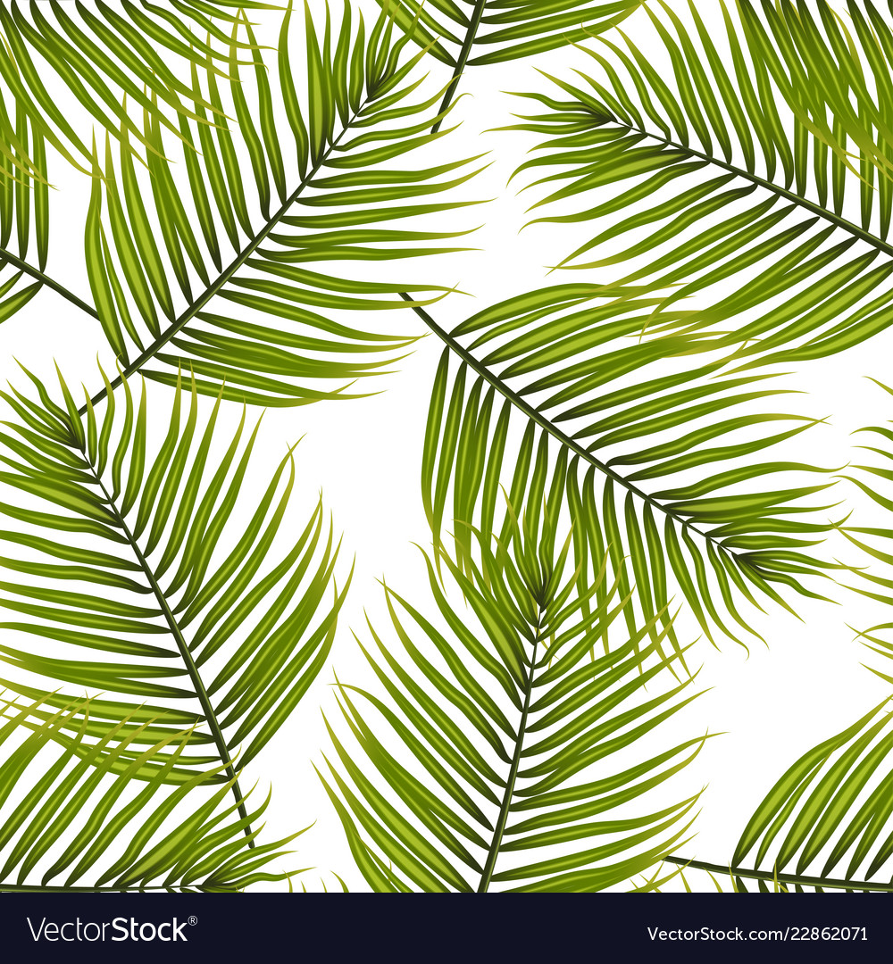 Palm Leaves Pattern Background