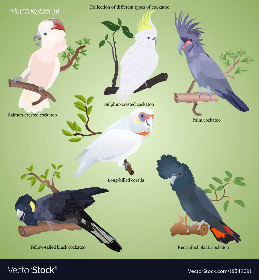 Collection of different types of realistic parrot vector image