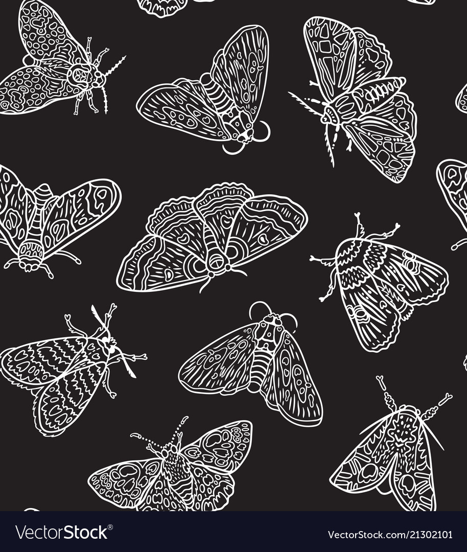 White contour butterflies and moths isolated on