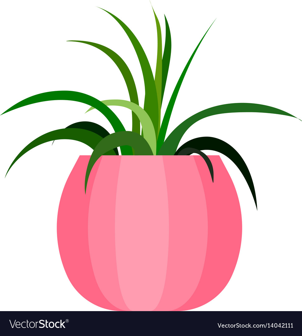 Green house plant in pot leaf flower flat vector image