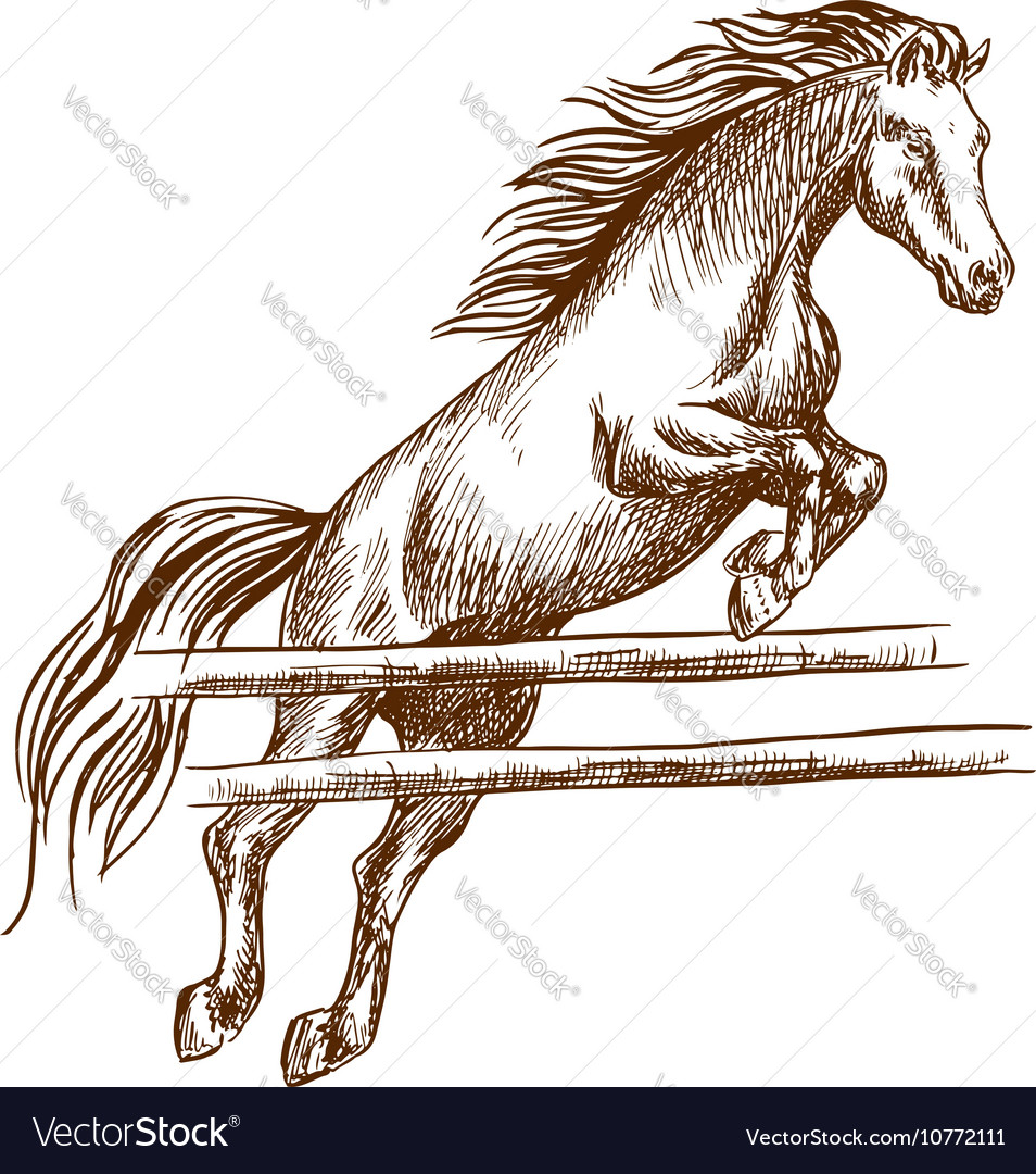 Wild Horse Jumping High Over Barrier Royalty Free Vector