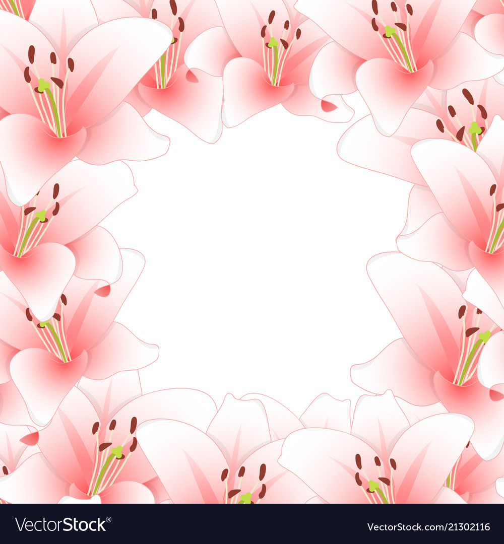 Pink lily flower border isolated on white vector image izmirmasajfo