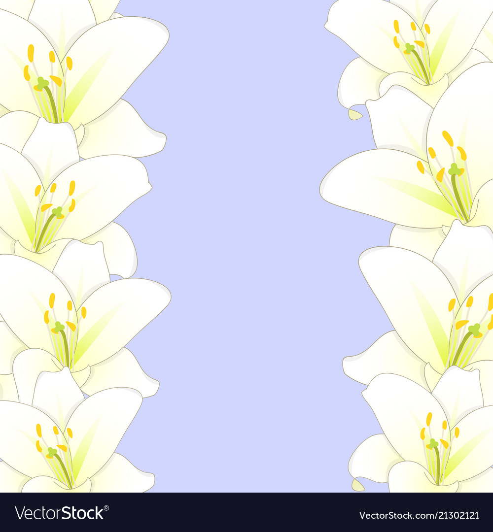 White lily flower border isolated on purple vector image izmirmasajfo