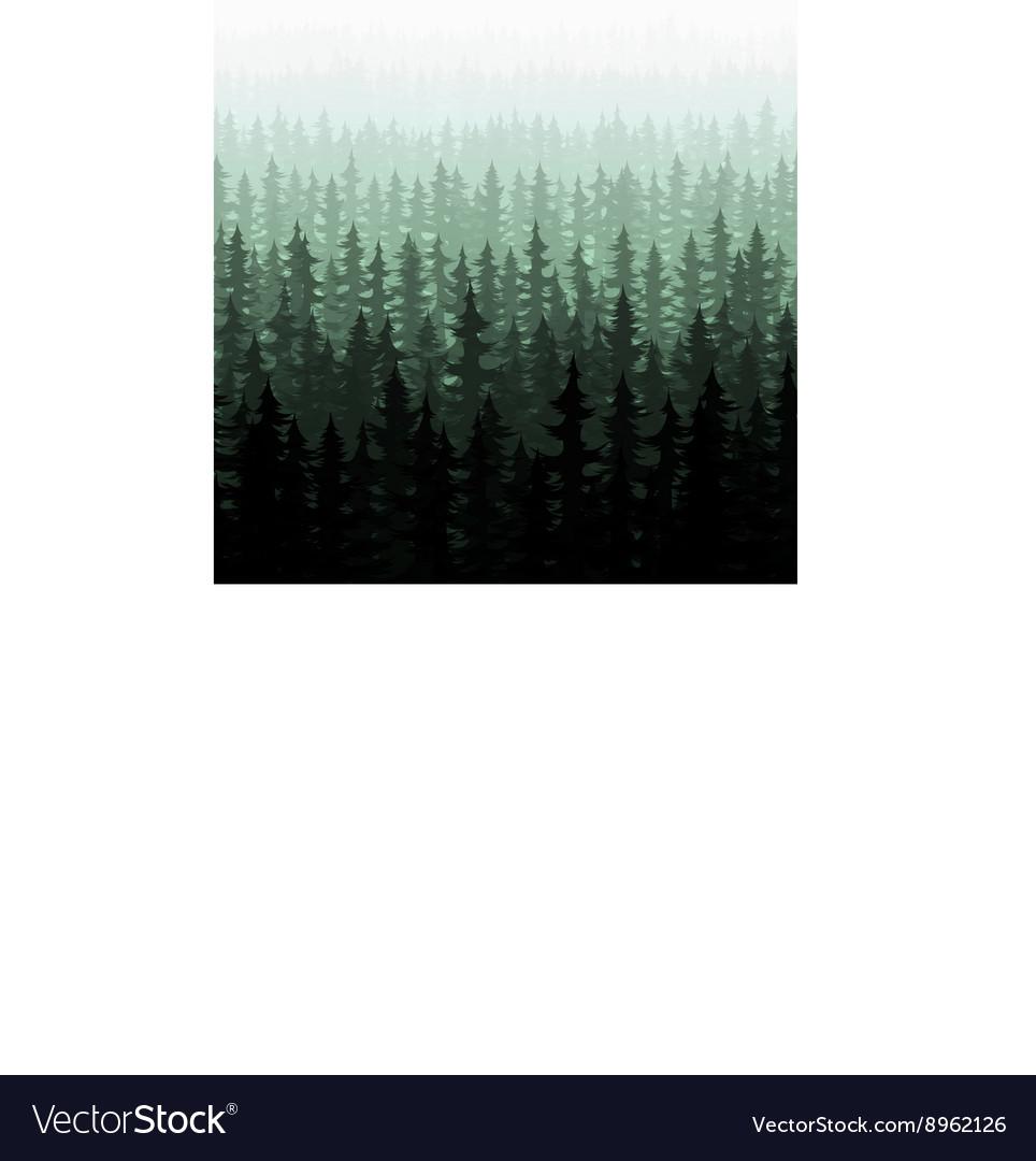 Nature forest landscape pine fir