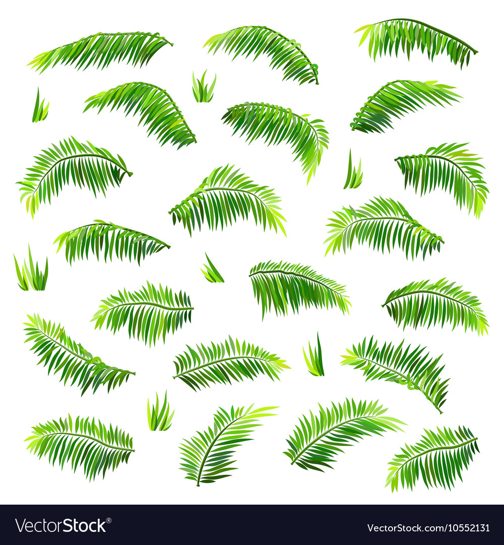Colored palm leaves set isolated on white