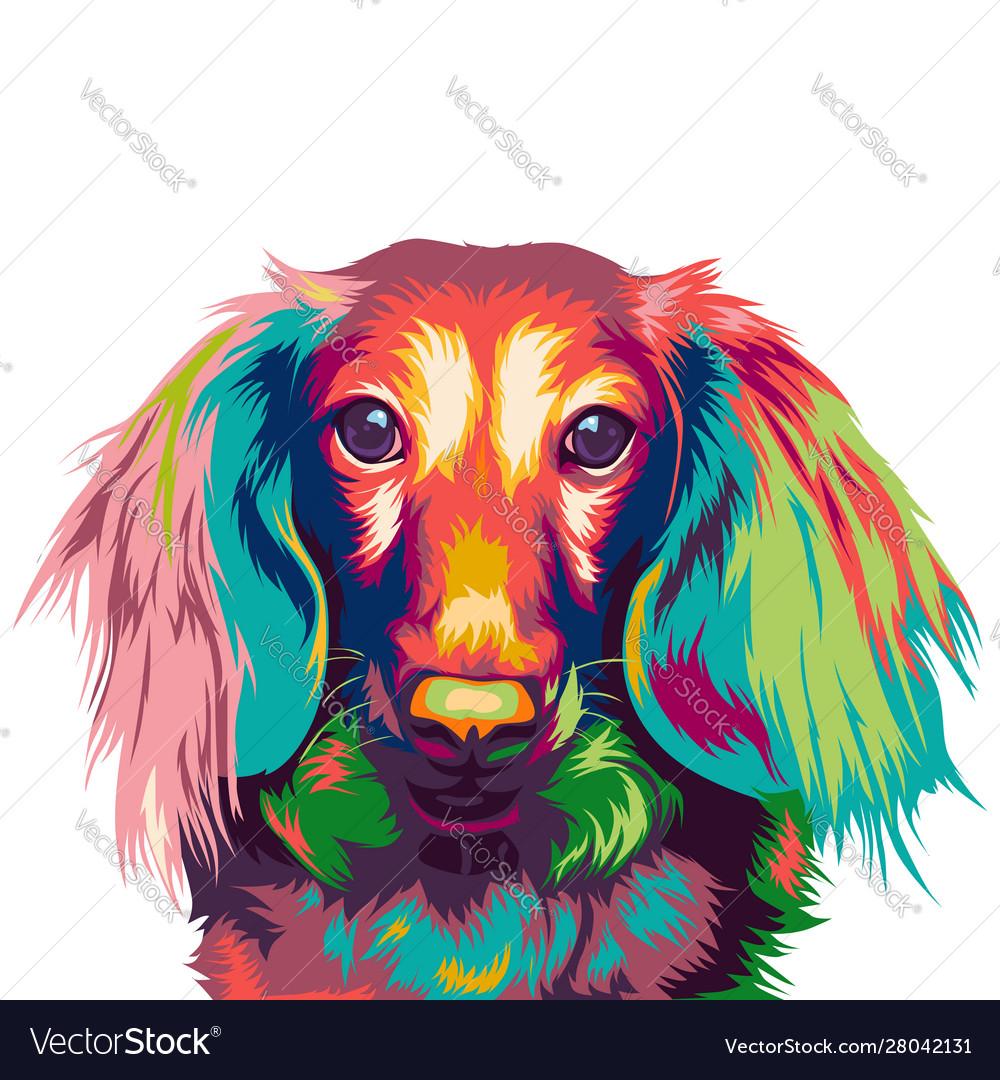 Dachshund dog in colorful