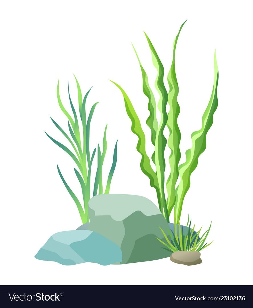 Aquatic plants with stones