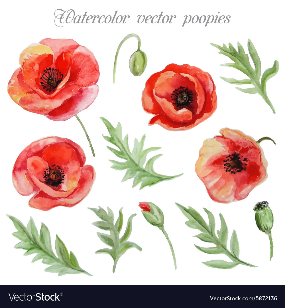 Set Of Red Watercolor Poppy Flowers Royalty Free Vector