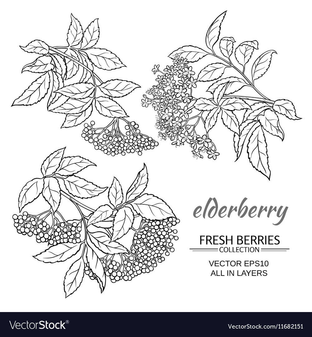 Elderberry set