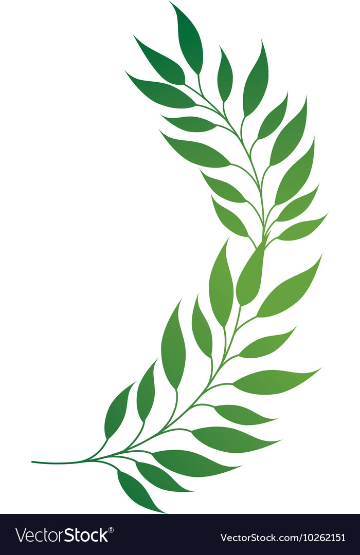 Leaf green plant leaves vector image