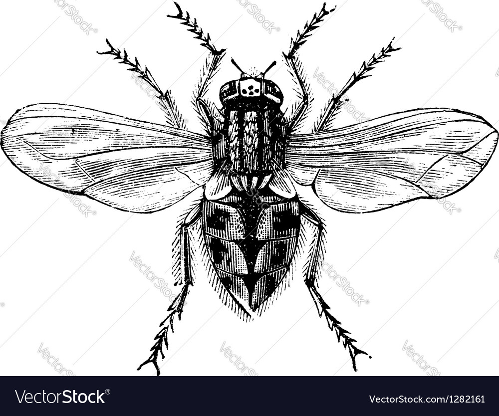 Exelent Anatomy Of A Housefly Image Collection - Physiology Of Human ...
